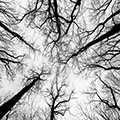 Trees/Eye Image by Markus Spiske